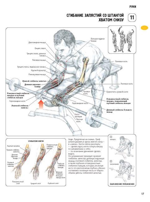 упражнения для мышц в картинках | aosjherncxja