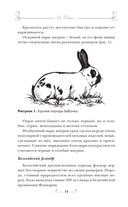 Кролиководство для начинающих — фото, картинка — 15