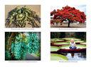 Самые необычные растения — фото, картинка — 6