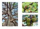 Самые необычные растения — фото, картинка — 7