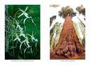Самые необычные растения — фото, картинка — 9