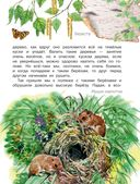 Рассказы о природе — фото, картинка — 3