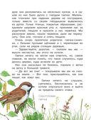 Рассказы о природе — фото, картинка — 4