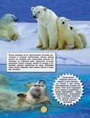 Животные — фото, картинка — 11