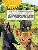 Животные — фото, картинка — 3