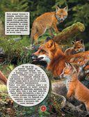 Животные — фото, картинка — 7
