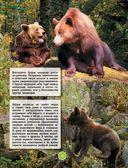 Животные — фото, картинка — 9