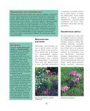 Садовые цветы. Подробное иллюстрированное руководство — фото, картинка — 9
