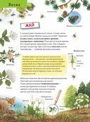 Лесной календарь — фото, картинка — 1