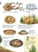 Лесной календарь — фото, картинка — 2
