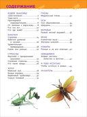 Насекомые. Энциклопедия для детского сада — фото, картинка — 1