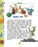 Животные для малышей — фото, картинка — 12