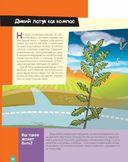 Лучшие научные эксперименты для детей. Физика, химия, биология — фото, картинка — 13