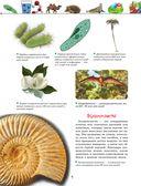 Большая энциклопедия. Животный и растительный мир — фото, картинка — 6