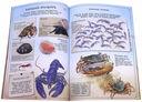 Жизнь океанов. Занимательная зоология — фото, картинка — 2