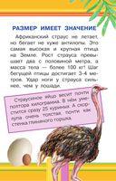 Удивительные птицы — фото, картинка — 3