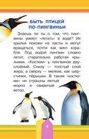 Удивительные птицы — фото, картинка — 4
