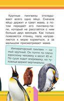 Удивительные птицы — фото, картинка — 5