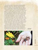Цветы для любого цветника за один сезон. Большая иллюстрированная энциклопедия — фото, картинка — 13