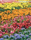 Цветы для любого цветника за один сезон. Большая иллюстрированная энциклопедия — фото, картинка — 4