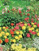 Цветы для любого цветника за один сезон. Большая иллюстрированная энциклопедия — фото, картинка — 6