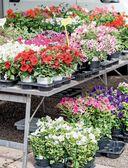Цветы для любого цветника за один сезон. Большая иллюстрированная энциклопедия — фото, картинка — 10