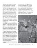 Пчеловодство. Все самое важное для тех, кто хочет стать пчеловодом — фото, картинка — 14