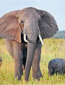 От слона до муравья с Дмитрием и Юрием Куклачевыми — фото, картинка — 2