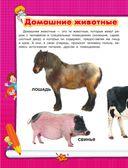 Животные — фото, картинка — 4