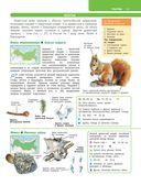 Большой определитель зверей, амфибий, рептилий, птиц, насекомых и растений России — фото, картинка — 11
