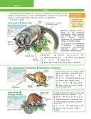 Большой определитель зверей, амфибий, рептилий, птиц, насекомых и растений России — фото, картинка — 14