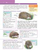 Большой определитель зверей, амфибий, рептилий, птиц, насекомых и растений России — фото, картинка — 4