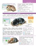 Большой определитель зверей, амфибий, рептилий, птиц, насекомых и растений России — фото, картинка — 5
