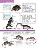 Большой определитель зверей, амфибий, рептилий, птиц, насекомых и растений России — фото, картинка — 6