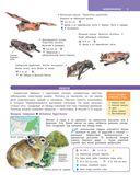 Большой определитель зверей, амфибий, рептилий, птиц, насекомых и растений России — фото, картинка — 9