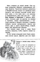 Рассказы о животных — фото, картинка — 4