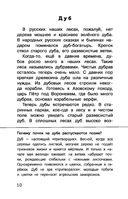 Русский лес — фото, картинка — 10