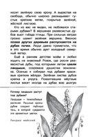 Русский лес — фото, картинка — 11