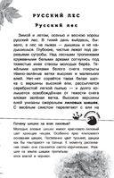 Русский лес — фото, картинка — 3