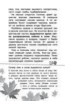 Русский лес — фото, картинка — 8