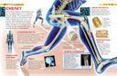 Тело человека — фото, картинка — 1