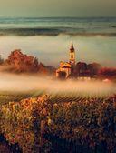 В погоне за вином. Винные туры по старому свету — фото, картинка — 3