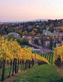 В погоне за вином. Винные туры по старому свету — фото, картинка — 8
