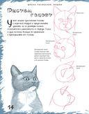 Школа рисования. Кошки — фото, картинка — 2