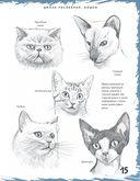Школа рисования. Кошки — фото, картинка — 3