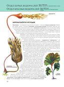 Растения. Полная энциклопедия — фото, картинка — 10