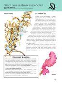 Растения. Полная энциклопедия — фото, картинка — 11