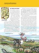 Растения. Полная энциклопедия — фото, картинка — 12
