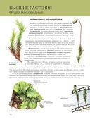 Растения. Полная энциклопедия — фото, картинка — 14