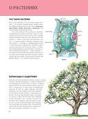 Растения. Полная энциклопедия — фото, картинка — 4
